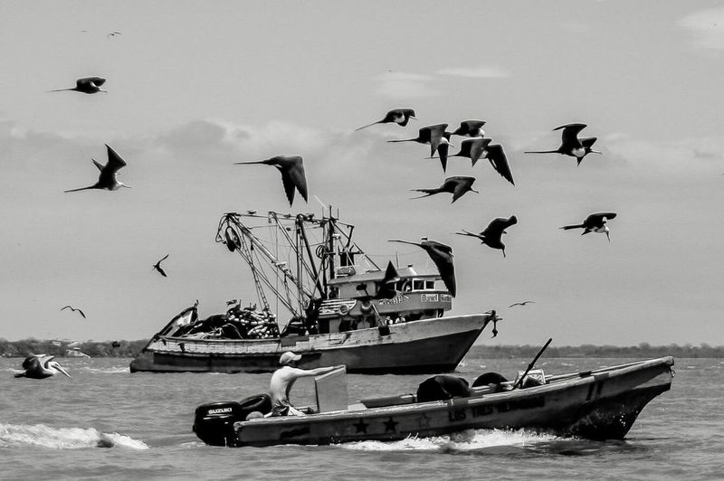 Nautical Vessel Flying Sea Sky Bird Large Group Of Animals Seagull Animals In The Wild Flock Of Birds Outdoors Nature Day Beach Transportation Water Men Spread Wings Horizon Over Water People Monochrome Blackandwhite Black & White Tour-thecity.com Fragatas Pelicanos
