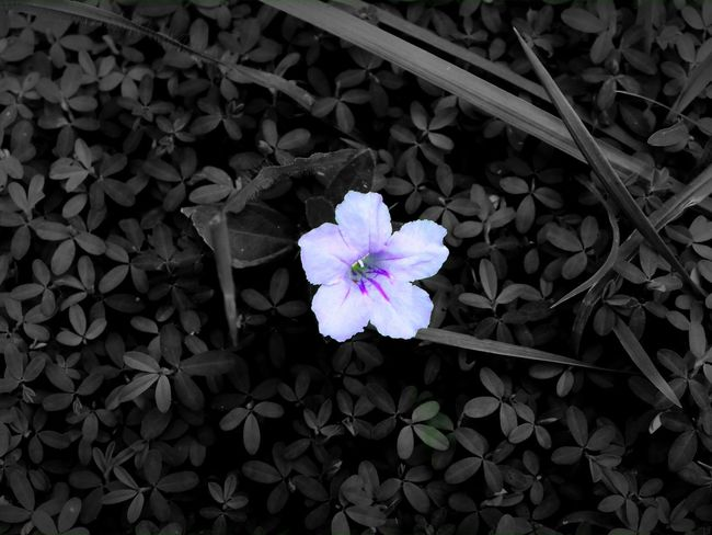 Flower Beauty In Nature Nature Plant Purple Outdoors Blooming Close-up Enjoying Life Kansasphotos Outdoor Photography Color Pop