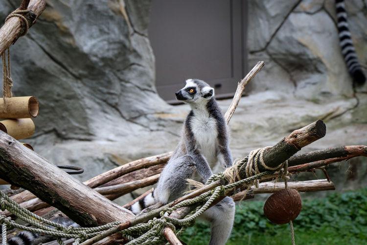 Monkey on tree branch in zoo
