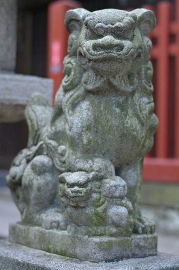 狛犬 富岡八幡宮 東京十社めぐり Guardian Lion-dog At Shinto Shrine Tokyo Shrine Stone Statue Animal Statue Japanese Shrine Tokyo Walking Around From My Point Of View Snapshoot