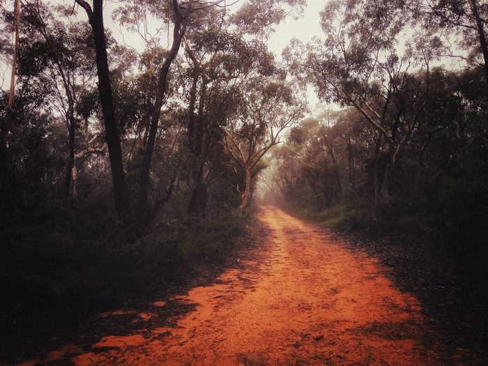 No People Tree Nature Outdoors Day Beauty In Nature Winter Wet Weather Bush Australia Dirt Road Hiking Trail Hiking Adventure Fog Blue Mountains Walking Track Path Onward