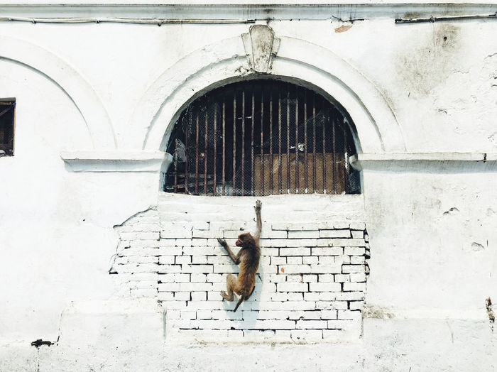 Cat on wall of building