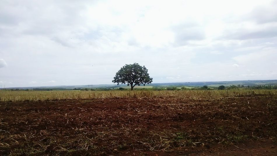 Tree Nature Photography Along The Way Brazil Afternoon