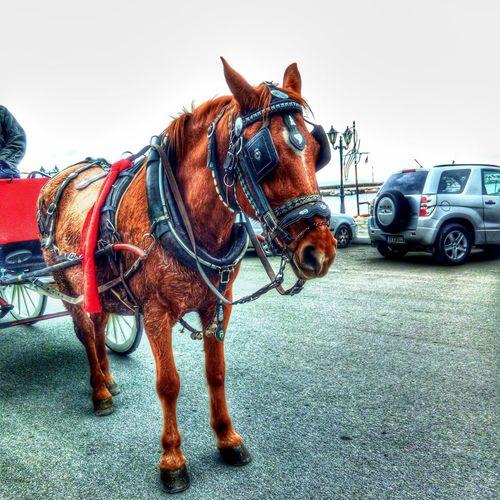 Horse Cart Car