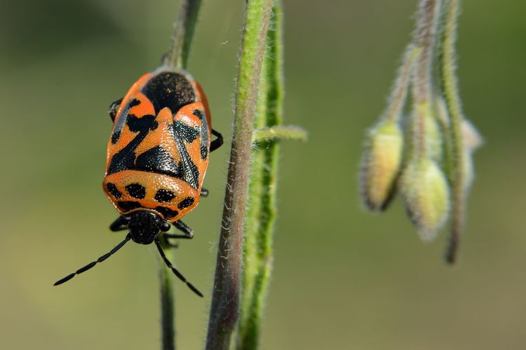 The Bug Bug Animal Animal Eye Animal Themes Animal Wildlife Animals In The Wild Beauty In Nature Beetle Bugs Close-up Day Flower Focus On Foreground Green Color Growth Insect Insect Photography Insects  Invertebrate Nature No People One Animal Plant Plant Stem Selective Focus