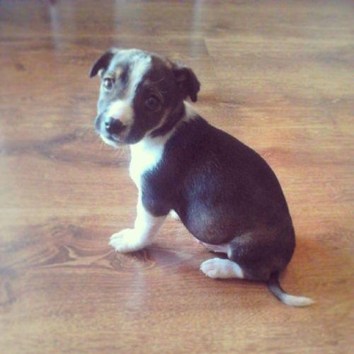 New Pet Taaaaki Kochany smallsweetcutedogzakochanalovehimweekendsunnydayspringpolandinstagoodinstadayf4f