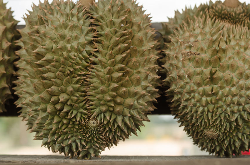 Expensive fruit durians. Crisp Shell Durian Aphthous Ulcer Delicious Durian Fruit Durian Season Expensive Fat Flour Freshness Fruit Green Color Natural Pattern Odor Seasonal Fruit Sharp Strong Smell Succulent Plant Thorn Tropical Fruit Yellow