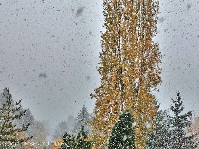 It's our first snowfall of the year! Tree Nature Sky KimberlyJTilley Washington State Landscape Winter Snow