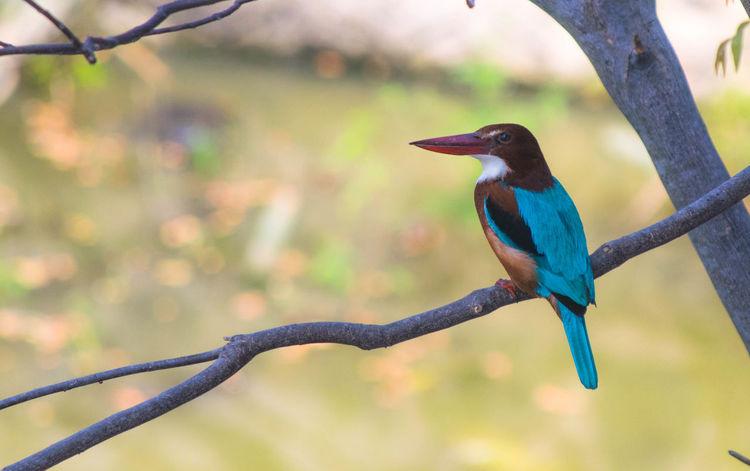 Amazing Bird Animal Wildlife Animals In The Wild Bird Bird Photography Birdfreaks BirdLovers Birds_collection Birdwatching Fisher Kingfisher Pocketbirds First Eyeem Photo