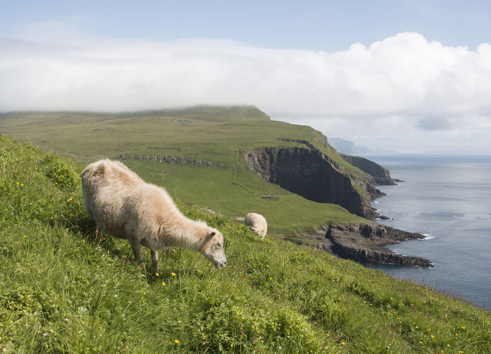 Denmark Faroes