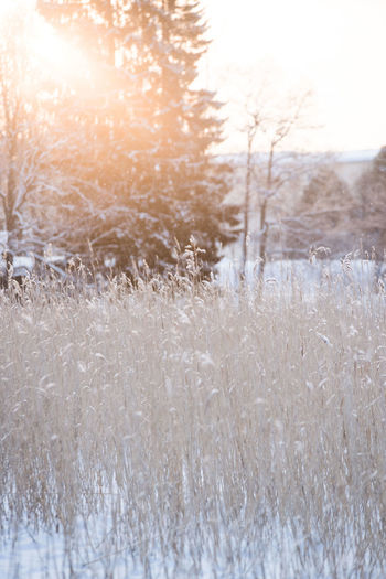 Beauty In Nature Close-up Cold Temperature Day Field Freshness Frost Frozen Landscape Nature No People Outdoors Rural Scene Scenics Sky Snow Snowflake Sun Tranquil Scene Tranquility Tree Weather Winter