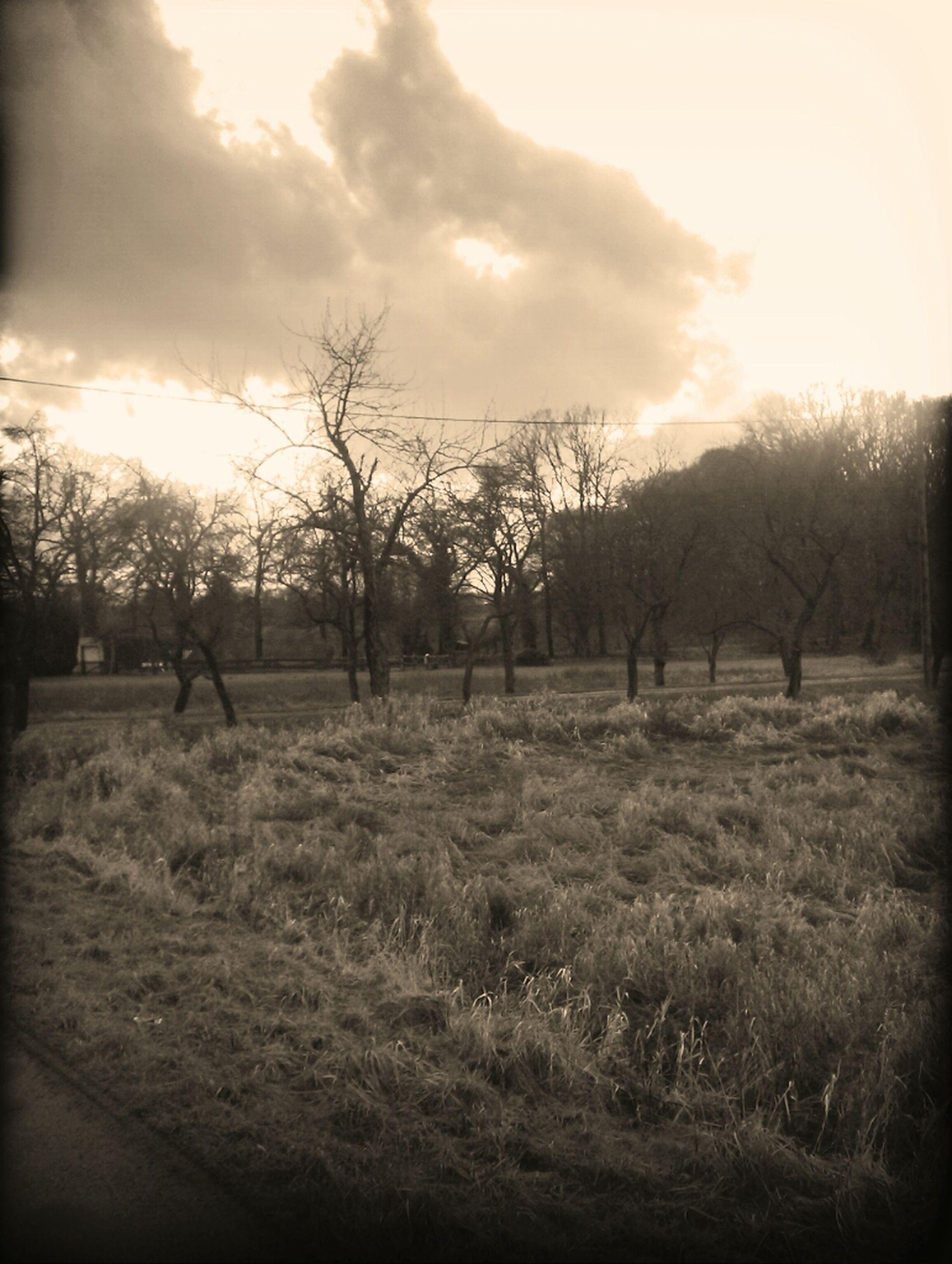 field, tree, landscape, tranquility, tranquil scene, grass, sky, nature, sunset, scenics, beauty in nature, grassy, rural scene, bare tree, sun, growth, sunlight, fence, non-urban scene, no people