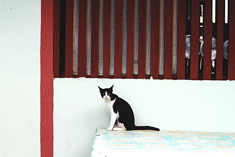 Domestic Cat One Animal Animal Themes Pets Domestic Animals Feline Mammal Cat Built Structure Day No People Sitting Architecture Outdoors Building Exterior Portrait