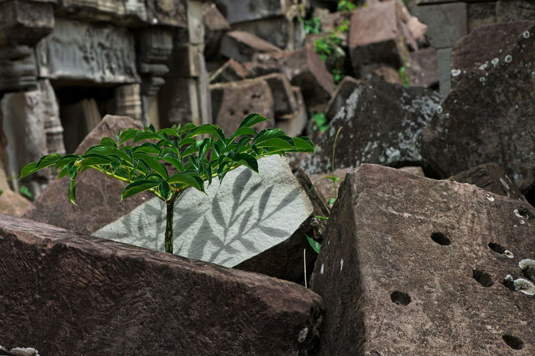 Close-up of leaves on rock against wall