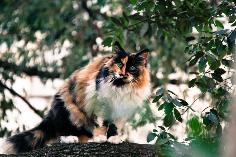 Animal Animal Themes Cat Cat Lovers Domestic Cat Feline Meow Nature Nature No People Outdoors Pets Whisker