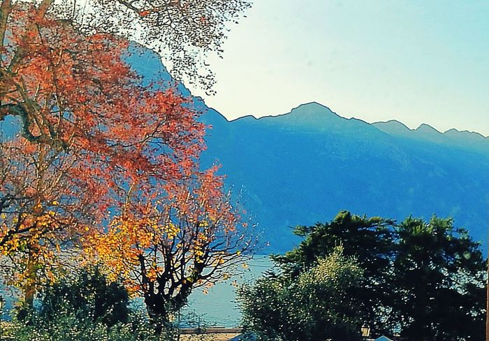 Sky Digital Composite Tree Cloud - Sky Nature Outdoors Beauty In Nature No People Day Mountain Colour Photography Tranquil Scene Italy Tranquility Gardalake Beauty In Nature Scenics Nature Landscape Water Lake Beauty Photography Multi Colored Reflection