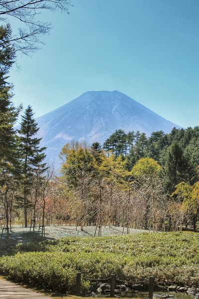 ASIA Beauty In Nature Clear Sky Climb Day Fuji Fujisan Fujiyama Grass Growth Japan Landscape Mountain Nature No People Outdoors Pine Scenics Sky Symbol Tranquil Scene Tranquility Travel Travel Destinations Tree