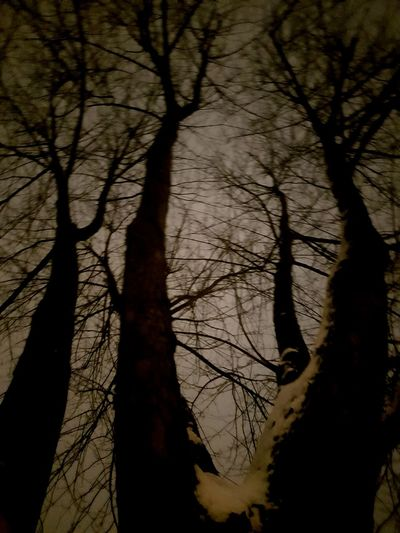 Night Sky Cold Temperature Tree Branch Bare Tree Tree Trunk Silhouette