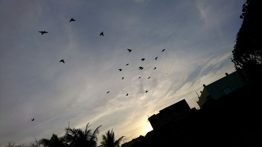 Sony Xperia Xz Takenwithxperia Shotbyxperia Itsme_itsXperia Mobilephotography Sky Clouds White Blue Superior Auto Auto Outdoor Birds Fly Flying