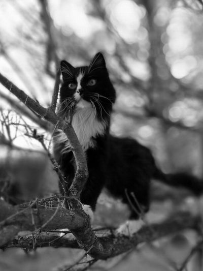 Monochrome Photography One Animal Animal Themes Focus On Foreground Domestic Cat Pets Domestic Animals Cat Mammal Close-up Looking At Camera Branch Feline Animal Eye Nature Day No People Pet Portraits