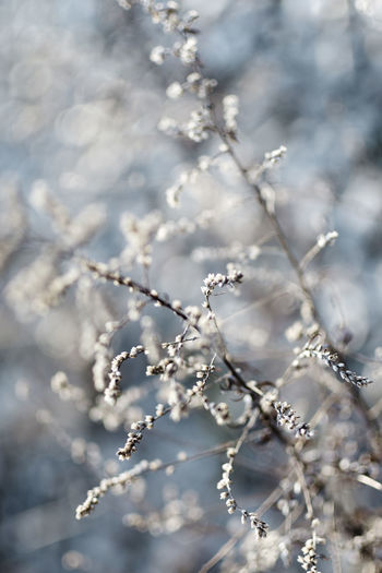 Nature Weather Winter Cold Dreary Invasive Thistle Vegetation Weed Wild