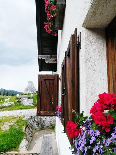 Relaxing Mountains And Valleys Malga Rainy Day Friuli Venezia Giulia Flowers Flowers At The Window Casera Paularo (udine) Geraniums Geranium Windows