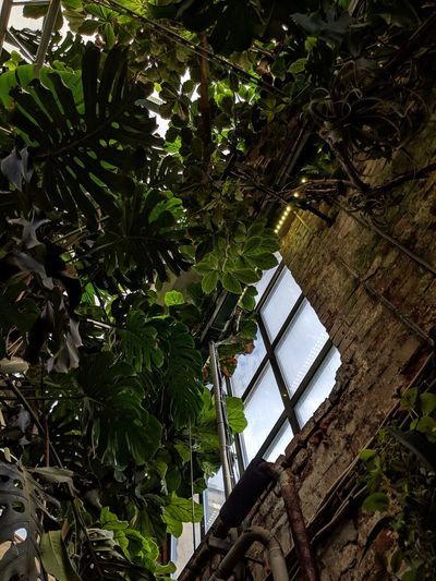 Low angle view of trees and plants against building