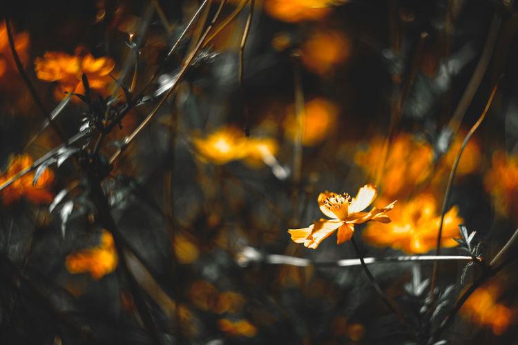 Close-up of orange flowering plant on field