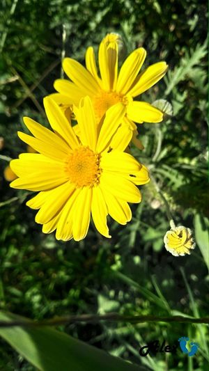 Flower Head Flower Yellow Black-eyed Susan Petal Insect Close-up Animal Themes Plant A New Beginning