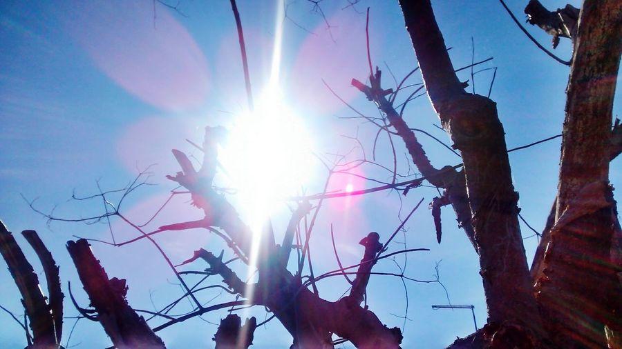Sun Arboles Vida Energia Pura Energy Argentina Photography Enjoying The Sun
