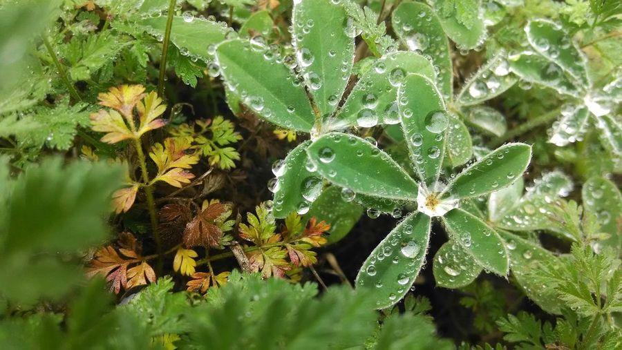 Dew Drops. Dew Nature Morning Concordia University Texas