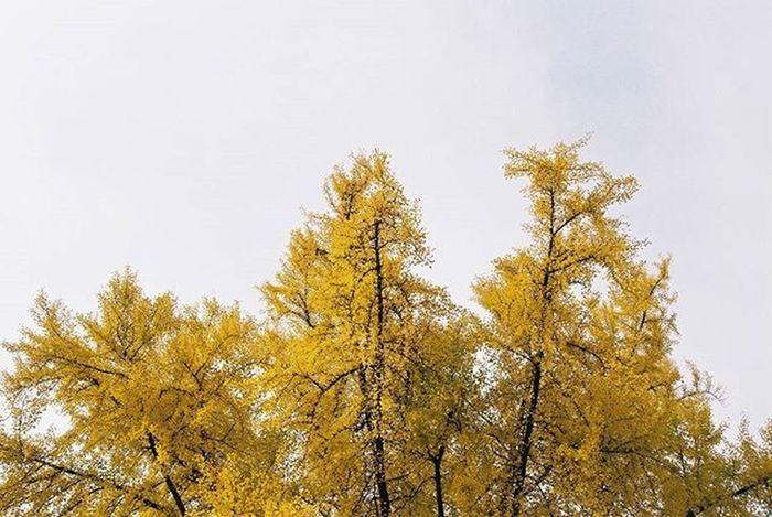 2015.11.17. 은행 Goodbyefall Seoul 35mm Film Filmisalive Nikon F70 N70 Kodak Kodakgold200 Kodakfilm Nofilter 필름사진