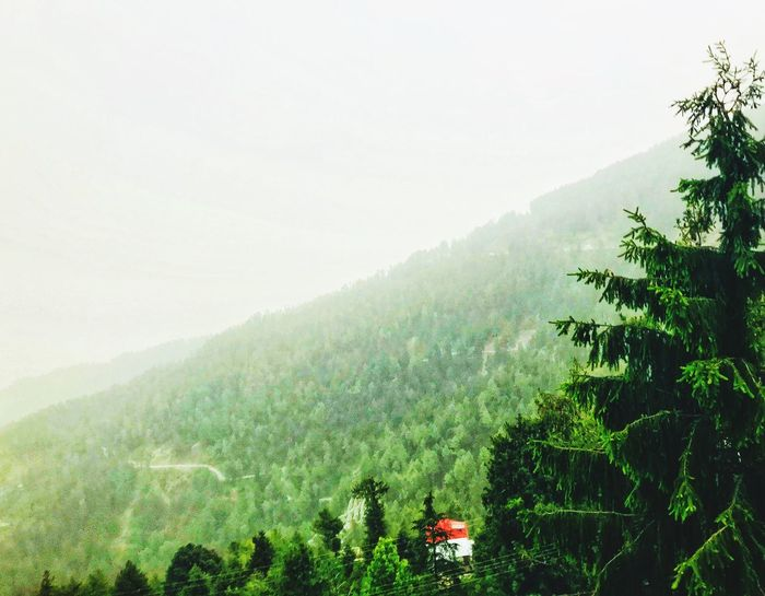 😍Mesmerizing View.....Mountains Out Of The World Plant Growth Tree Beauty In Nature Tranquility Nature Scenics - Nature No People Sky Environment Outdoors Green Color Landscape Plantation Fog Mountain Non-urban Scene Land Tranquil Scene