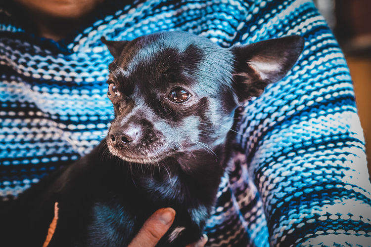 Close-up of person with dog relaxing at home