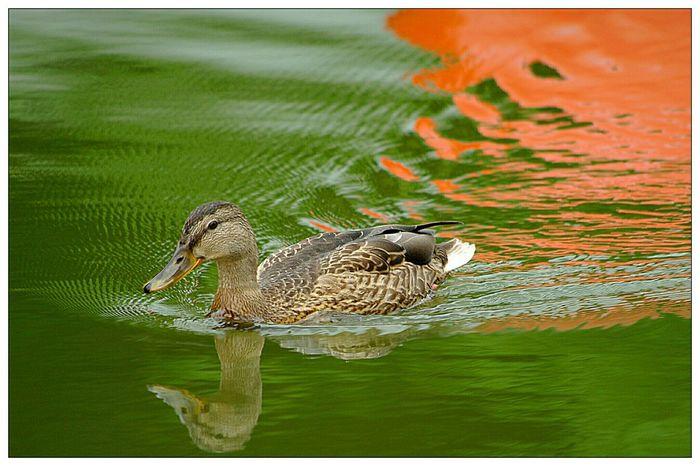 Rule Of Thirds Schwanenteich EyeEm Best Shots - Nature EyeEm Deutschland For You ;-)