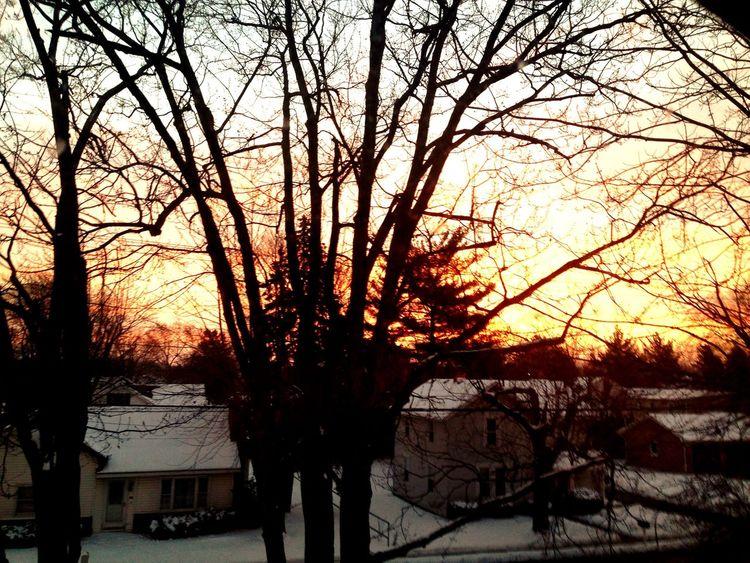 January Tree Hugger Early Bird Sunrise Ohio