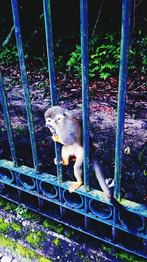 Monkey Photooftheday Bestoftheday Nature Eye Em Nature Lover Nature_collection Monky All_shots Animal Photography Sugoi