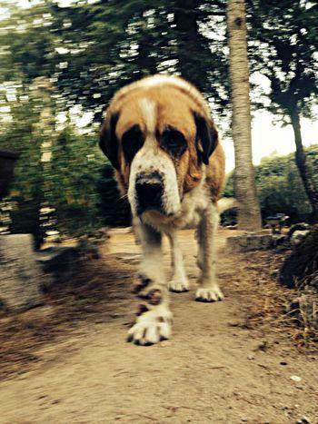 My beloved monster ❤️ Dog Lovehim♡