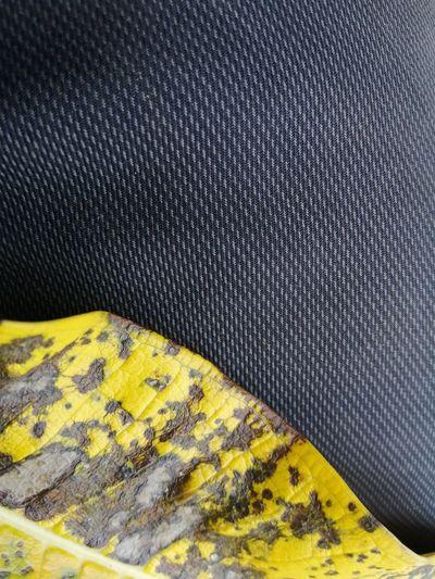 High angle view of yellow lizard on metal