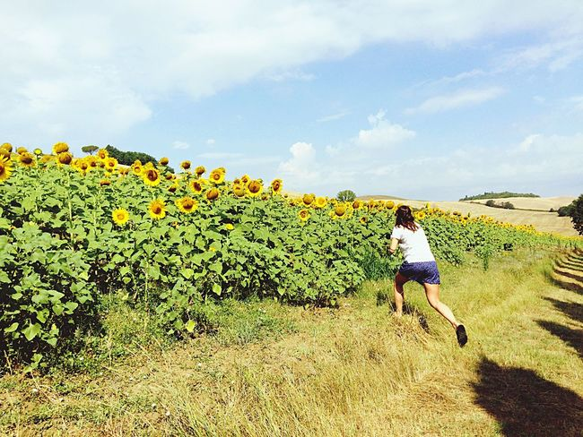 Sun Sunflower Plant Flower Yellow Field Sky Rural Scene Nature Beauty In Nature Cloud - Sky Outdoors Run Running Escaping Into The Wild Tuscany