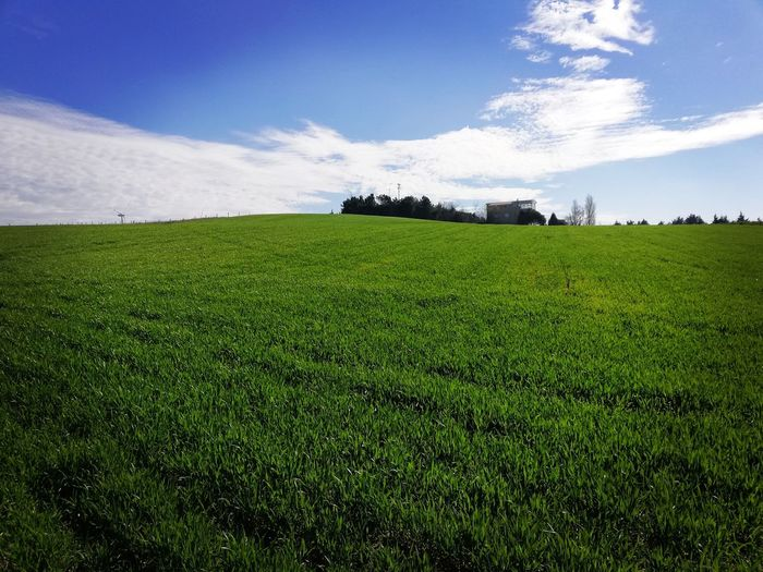 Rural Scene Agriculture Field Cereal Plant Crop  Sky Grass Green Color Landscape This Is Masculinity