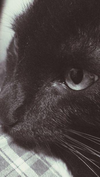Cat Amimals Blackandwhite Black & White