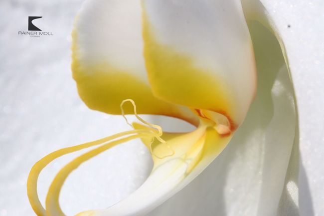Orchid Orchidee. Orchidee