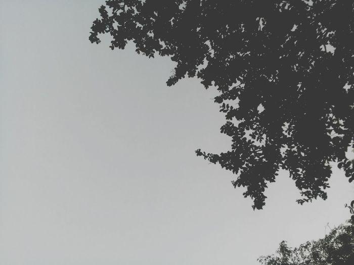 Cloudy. Relaxing Enjoying Life Sky