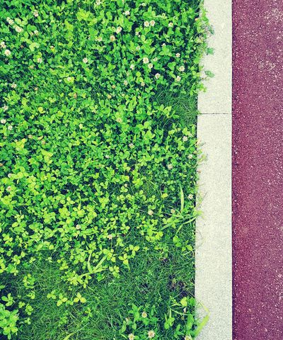Lines Contrast Asphalt Sidewalk Soccer Field Field Playing Field High Angle View Grass Close-up Green Color Grassland Green Young Plant Greenery EyeEmNewHere