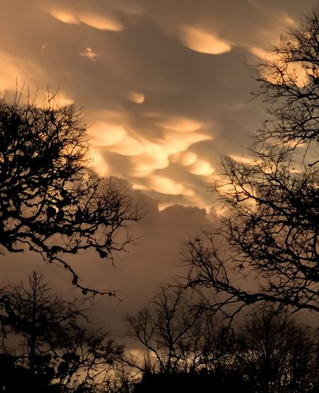 Tormenta en Buenos Aires Tree Plant Sky Beauty In Nature Silhouette Cloud - Sky Branch Sunset Nature Scenics - Nature No People Low Angle View Non-urban Scene Outdoors
