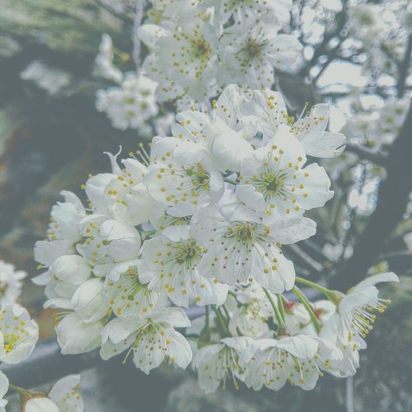 Flower Collection Flowers, Nature And Beauty Spring Spring Flowers Freshness Guiyang