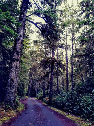 The Way Forward Tree Day Outdoors Nature No People Growth Road Forest Beauty In Nature Landscape Travel Destinations Washington Love To Take Photos ❤ Scenics Beauty In Nature Tree Dont Look Back Blue Color Green Color Forest Photography Forest Road Hikingadventures Long Road... Washington Coast Perspectives On Nature