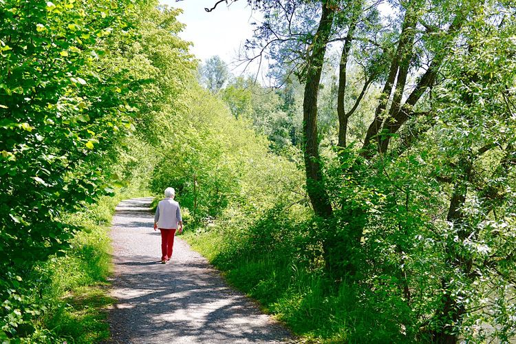Rear view of senior woman walking on footpath amidst trees