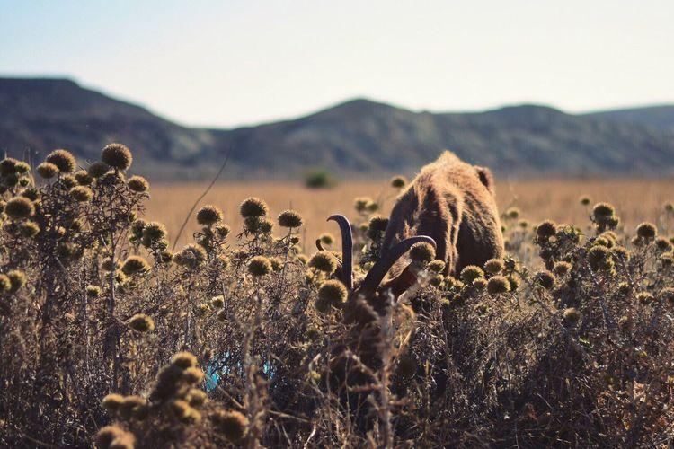 Mammal grazing on field against sky